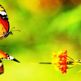 Én és a pillangó
